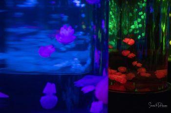 Sarah McPherson Jellyfish