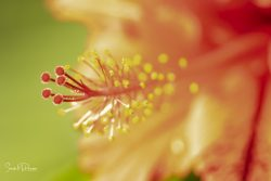 Sarah McPherson micro - orange flower