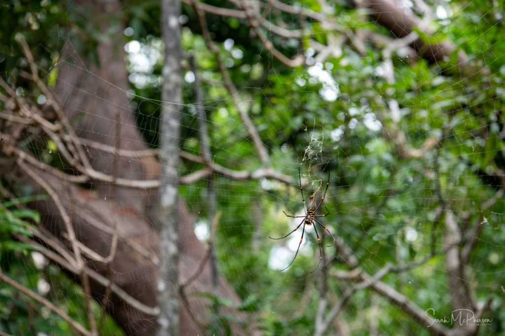 Spiders in a web at Whitehaven Beach